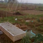 cold frame