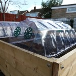 Plastic Cloches from B&Q protecting seeds