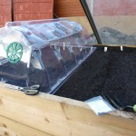 Plastic cloches from B&amp;Q protecting seeds