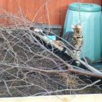Cat proofing the seed beds